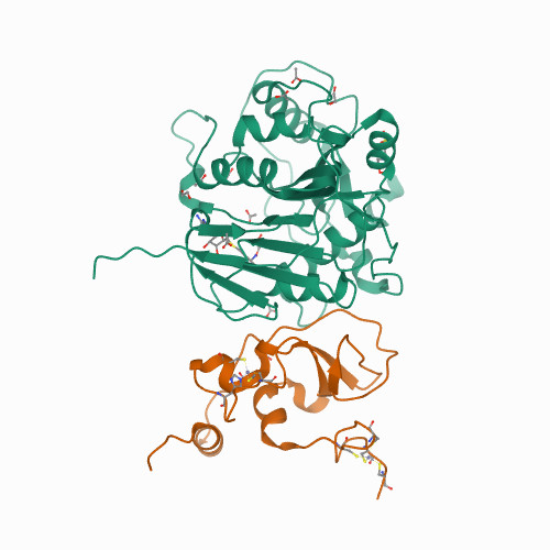 Structure of SARS-CoV-2 nsp16/nsp10 complex in presence of S-adenosyl-L-homocysteine (SAH)