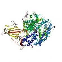 Structure of 2019-nCoV chimeric receptor-binding domain complexed with its receptor human ACE2